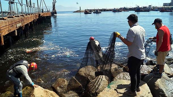 municipalidad-realiza-gran-operativo-de-limpieza-en-el-terminal-pesquero-de-antofagasta
