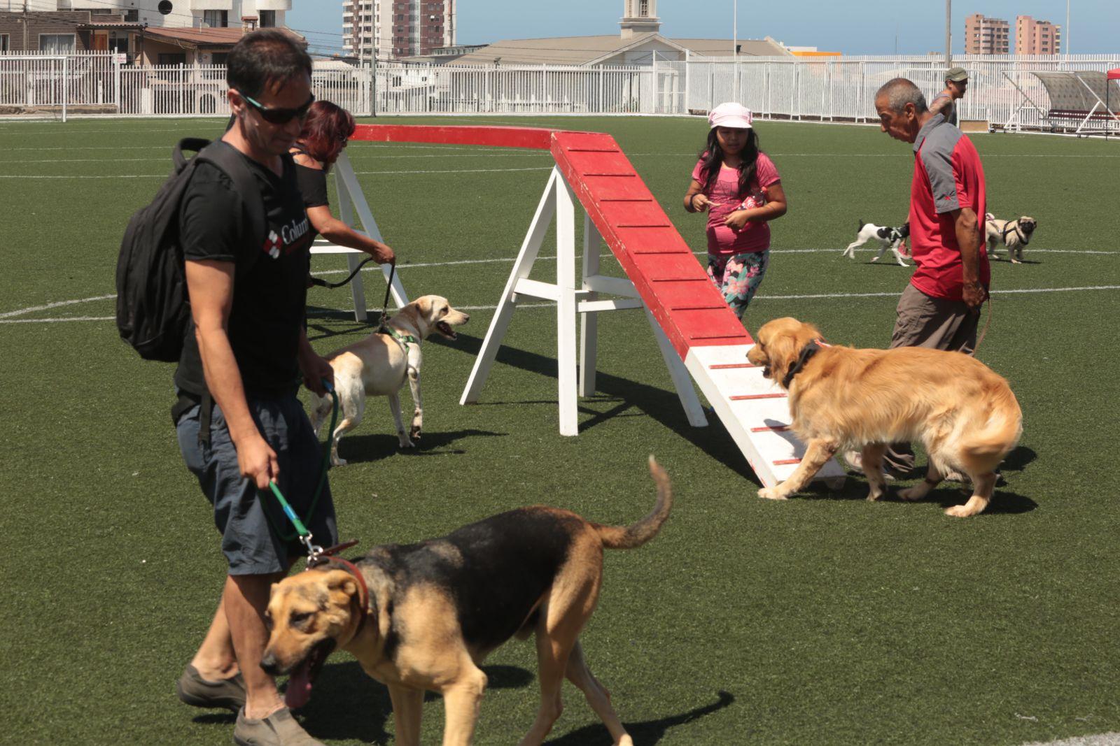 decenas-de-amantes-de-los-animales-participaron-en-tercera-competencia-de-agilidad-canina